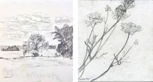 "James River and Queen Anne's Lace, graphite sketchbook, each 8""X8"", 2010"