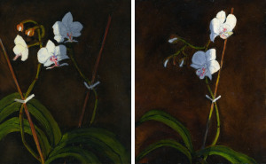 "Orchids 1 and 2, oil on panel, 10""X8"" each, 2008"