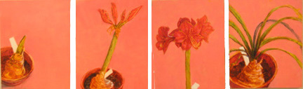 "Amaryllis, oil on panels, 10""X32"", 2010"