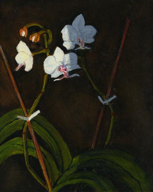 Orchids left 72dpi, 1k