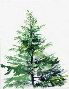 "Young Douglas Fir, Oregon State Tree, watercolor, 10""X7"", 2004"