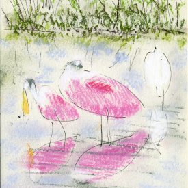 "Ding Darling, Roseate Spoonbill II, ink and pastel on paper, 5""x3,""  2007 – LD-22"